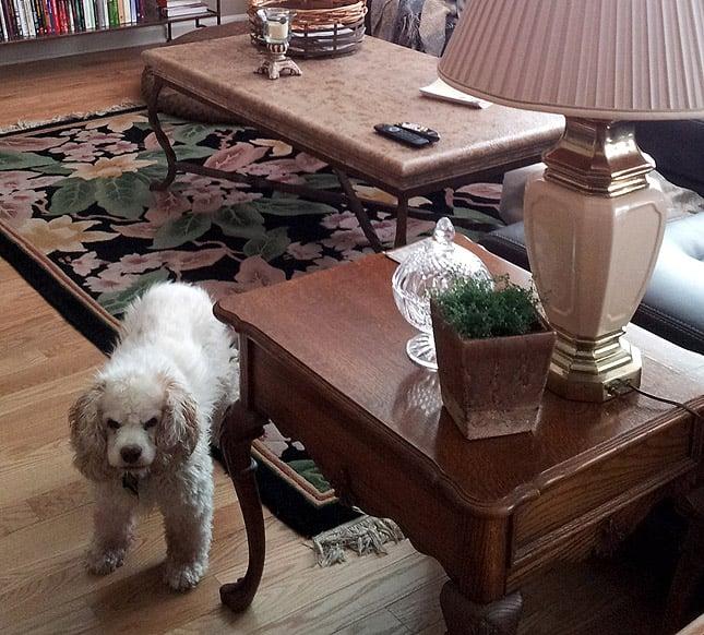 abbie-new-house