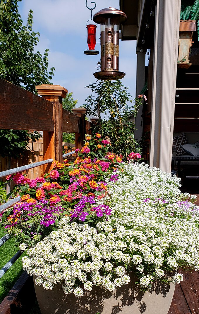 Flowers on the Backyard Deck in Pots under Bird Feeders