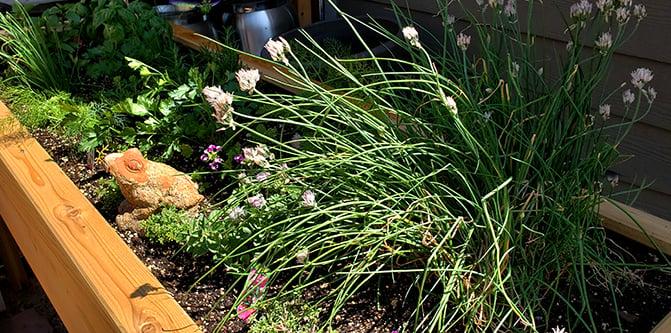 Herb Garden Box